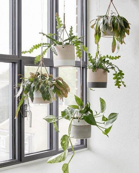 best indoor hanging plants indoor hanging baskets wwwcoolgarden indoor hanging plants
