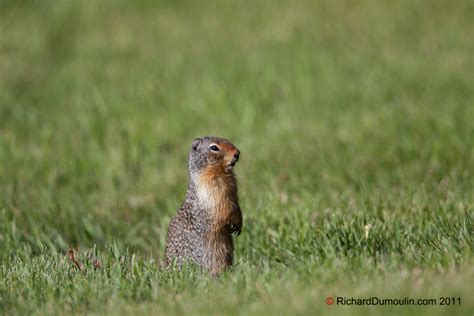 pictures of prairie dogs prairie in photo s richarddumoulin