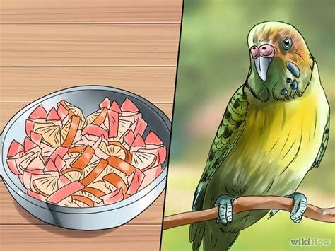 how to take care of a 6 week puppy how to take care of a parakeet with pictures wikihow