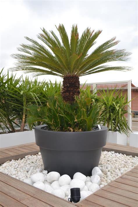 plaques de schiste espace vegetalise sec sur terrasse en