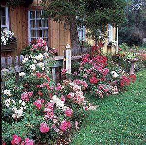 rose themed landscape roses milberger s landscape nursery