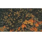 Nature Trees Forest Road Fall Landscape Aerial View