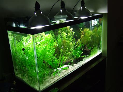 led light for 55 gallon aquarium need lighting help for a 55 gallon planted tank