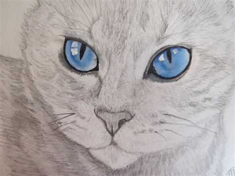 imagenes a lapiz de gatos dibujo de un gato hecho por mi paso a paso d taringa