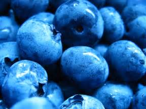 blueberry color blue blueberry colors photo 34683009 fanpop
