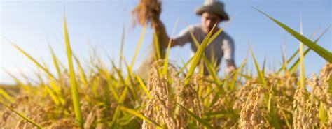 elenco sedi inail bando inail isi agricoltura 2016 prorogate le scadenze