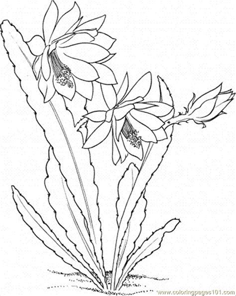 cactus flower coloring page coloring pages cactus 6 natural world gt flowers free