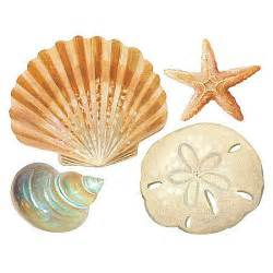 Seashell Wall Stickers Wallies Shells Wall Stickers 24 Decals Bathroom Decoration