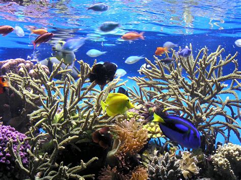 new aquariumist freshwater vs saltwater