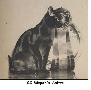 We Are The Cat Excerpt by The Way We Were Excerpts From The 1958 Cfa Yearbook Part 5