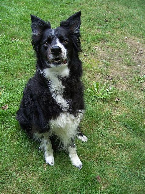 black and white breeds white and black breeds