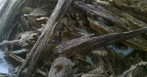 Kayu Gaharu Merauke Papua jual kayu gaharu jual kayu gaharu papua dan kalimantan