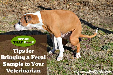 fecal test for dogs bringing a fecal sle to your veterinarian scoopthatpoop pawsitively pets
