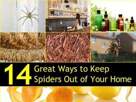 how to keep spiders out of the house 14 great ways to keep spiders out of your home naturally
