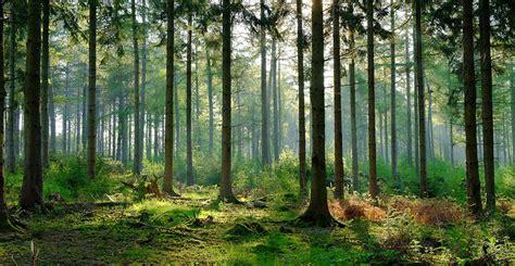 esto es lo que ocurre en el bosque cuando nadie lo observa cultura inquieta