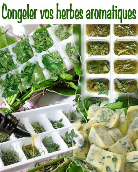 Herbes Aromatiques Cuisine Liste by Herbes Aromatiques En Cuisine Liste Des Herbes
