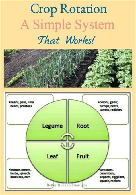 Garden Crop Rotation A Simple System Vegetable Garden Rotation Chart