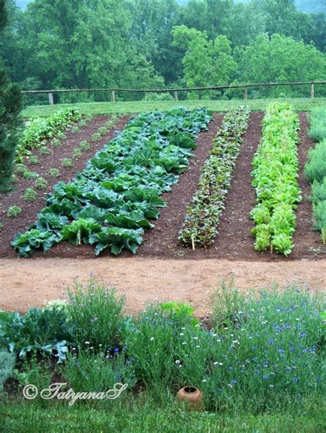 Monticello Vegetable Garden The Ultimate Kitchen Garden Beautiful Vegetable Garden Pictures