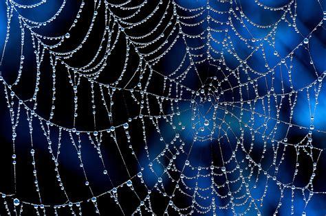 Blau Schwarz Muster spider web 4k ultra hd wallpaper and hintergrund