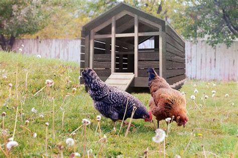hühnerhaltung im garten h 252 hnerhaltung im garten tipps infos