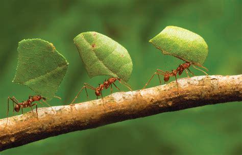 » Ants