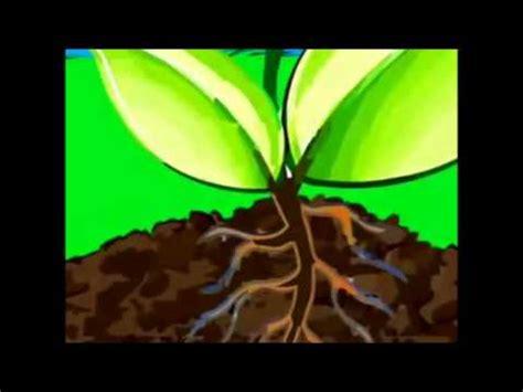 fotosintesis de las plantas fotos 237 ntesis y respiraci 243 n de las plantas youtube