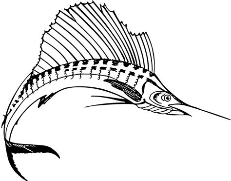 sailfish coloring pages sailfish clipart cliparts co