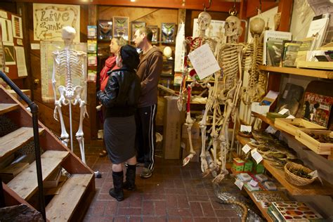 bone room berkeley shop talk the bone room photo center lmi net more berkeleyside