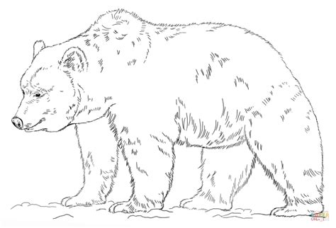 simple bear coloring pages free grizzly bear coloring page animal easy grizzly