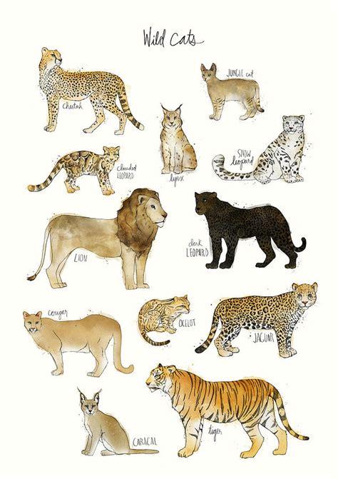 Cheetah Print Duvet Wild Cats Painting By Amy Hamilton