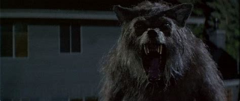 laste ned filmer beautiful boy 2018 forgotten werewolf movies that need to be rediscovered