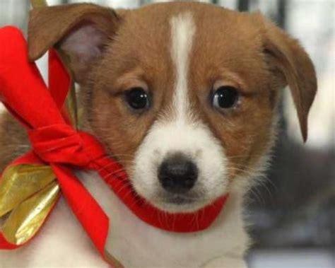 comprare animali online a natale adotta un cane non lo comprare video vip
