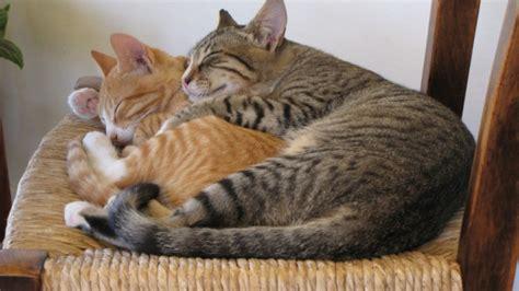 wie lange schlafen katzen zuckt das ohr tr 228 umt die katze b z berlin