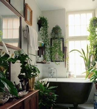 houseplants for the bathroom plants in the bathroom el nido pinterest