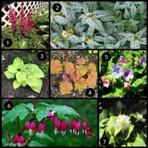 colorful shade plants how to create a colorful shade garden honest
