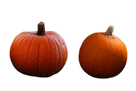 pumpkin of pumpkin png by karahrobinson on deviantart
