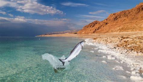 imagenes impresionantes del mar muerto cumplimiento de ezequiel 47 las aguas del mar muerto