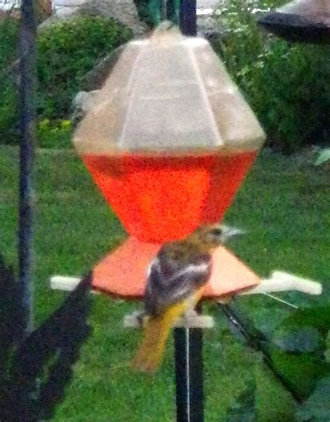 id mommy make your own hummingbird oriole food