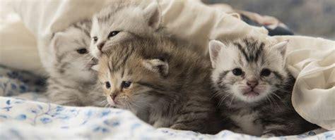 wie weit gehen katzen zuhause weg katzen erziehen so klappt 180 s ganz einfach allianz
