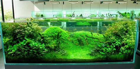 aquascape design takashi amano nature aquariums and aquascaping ideas by takashi amano