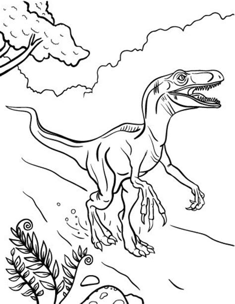 velociraptor coloring page velociraptor coloring pages best coloring pages for
