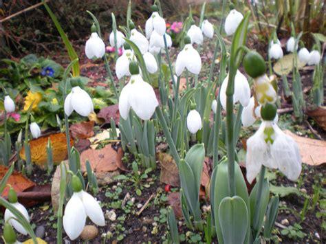 immagini gratis fiori di primavera fiori di primavera immagine gratis domain pictures