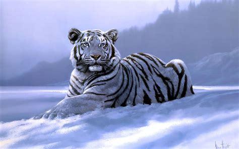 White Snow Tiger Wallpaper