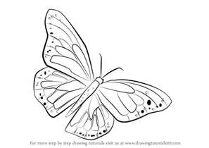 butterfly sketch drawing images