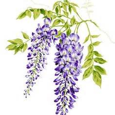 copy right free pictures of purple wisteria purple wisteria cliparts free clip free clip on clipart library