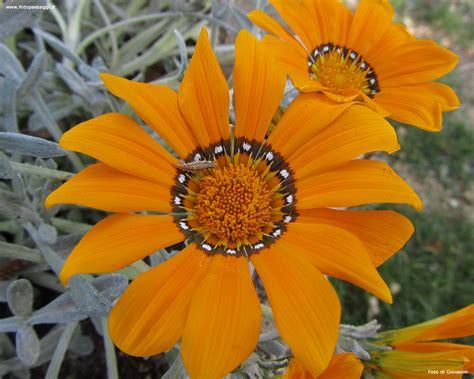 i fiori it sfondi per desktop i fiori sfondo 016