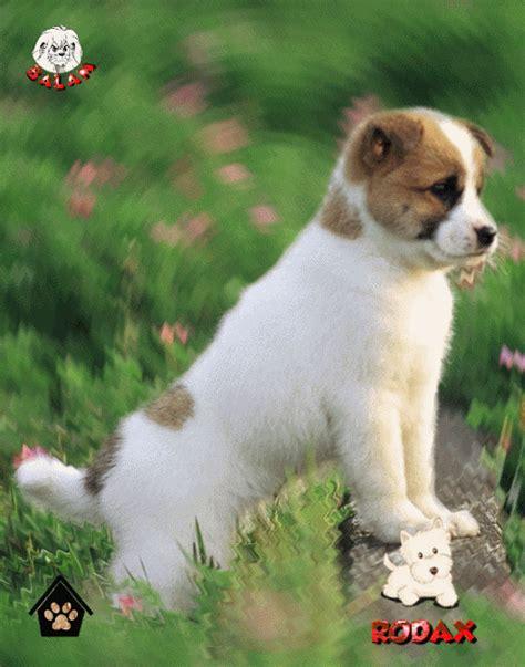imagenes de perros animados con movimiento y frases tiernas imagenes con movimiento de perritos imagenes de