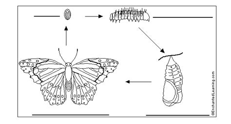 cycle of a butterfly worksheets for 2nd grade