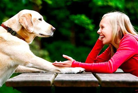 how to communicate with dogs how to communicate with dogs and be understood