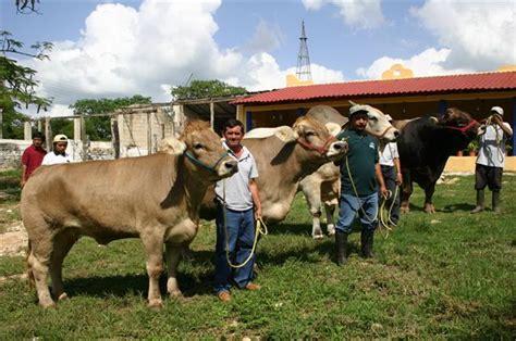 imagenes de paisajes ganaderos noticias slp ganaderos reciben apoyo de 103 mdp por sequ 237 as
